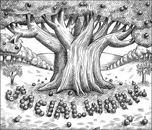 Drawing of orchard with Social Work spelt out in apples at the foot of a tree